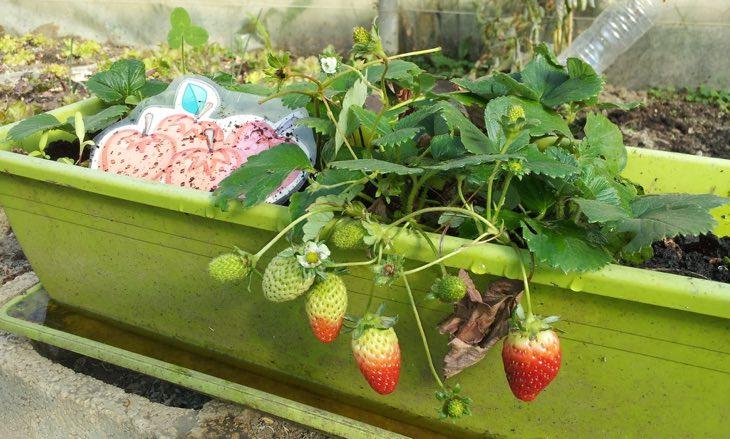 insecticidas naturales recetas caseras