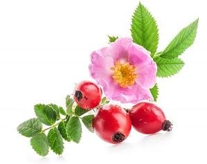 rosa mosqueta usos y propiedades
